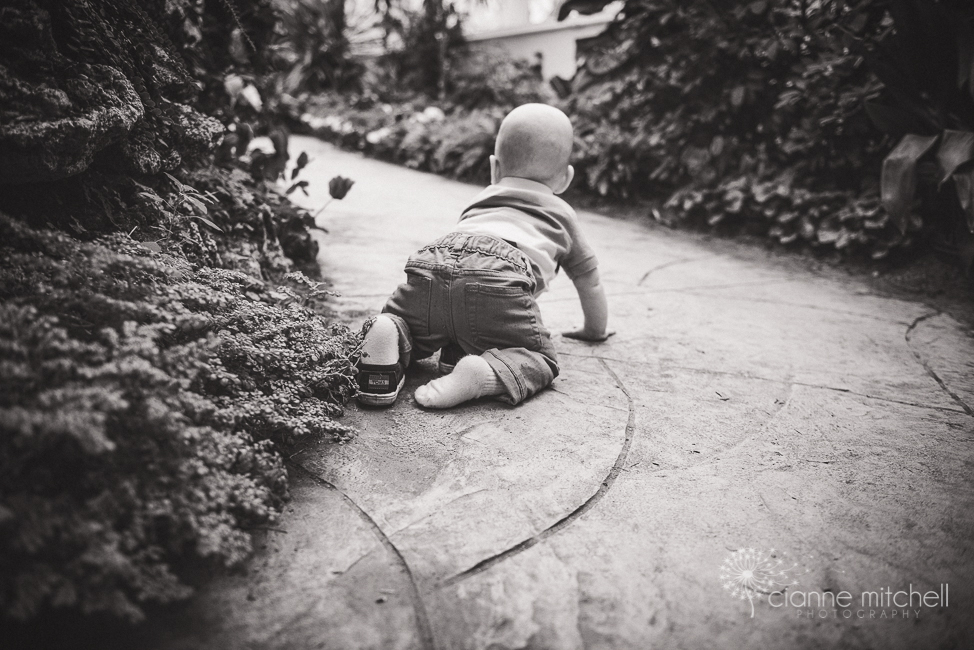 Baby boy photography session